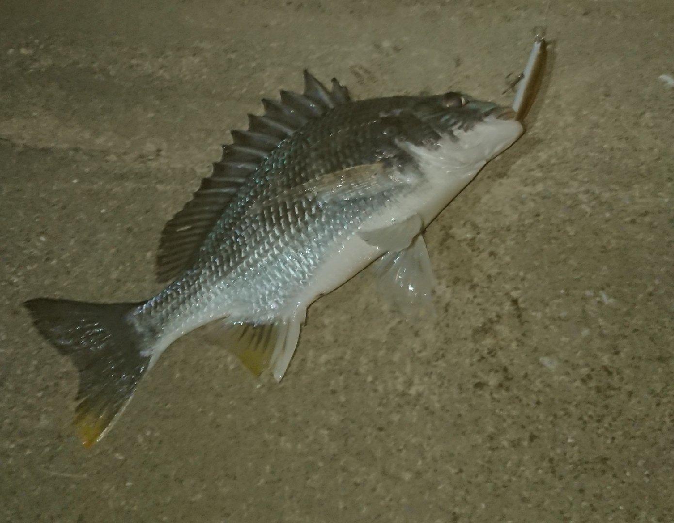 KENさんの投稿画像,写っている魚は