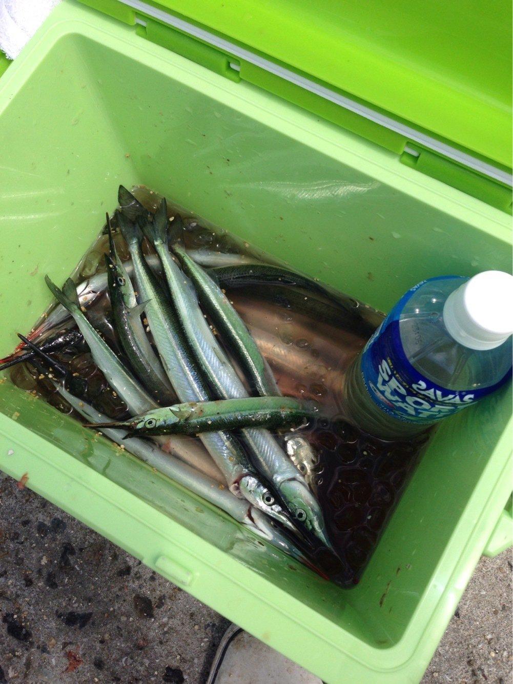ふるっちさんの投稿画像,写っている魚はサヨリ