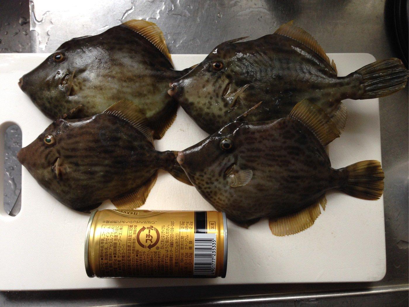ふるっちさんの投稿画像,写っている魚はカワハギ