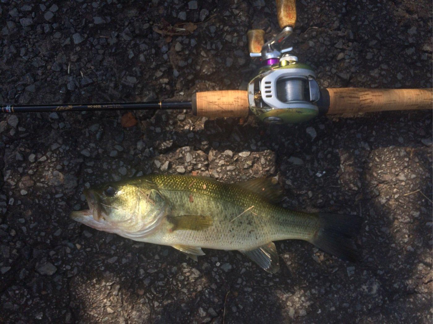エンドウさんの投稿画像,写っている魚はブラックバス