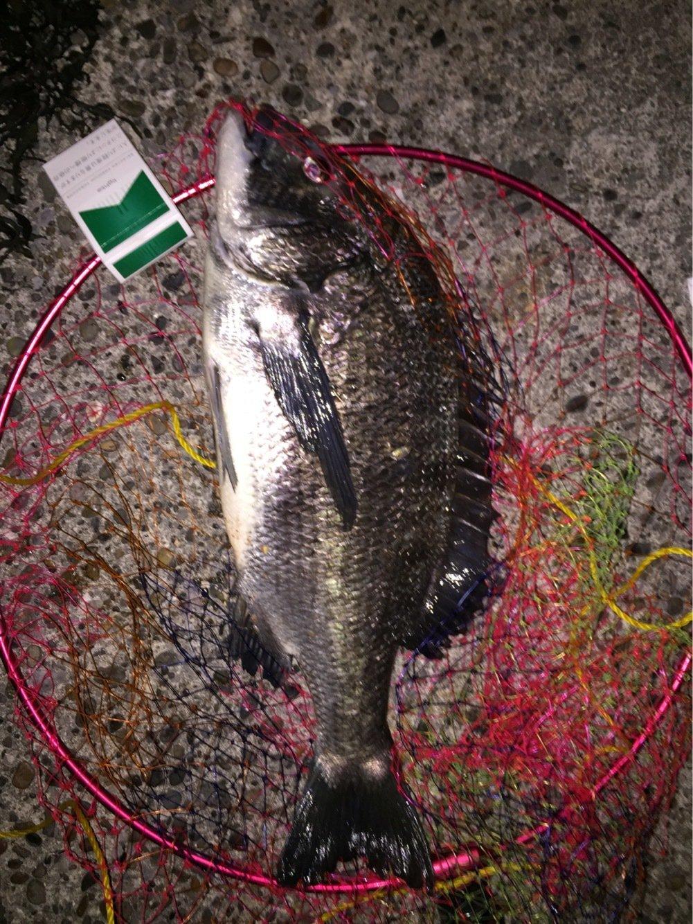 ウカイさんの投稿画像,写っている魚はクロダイ