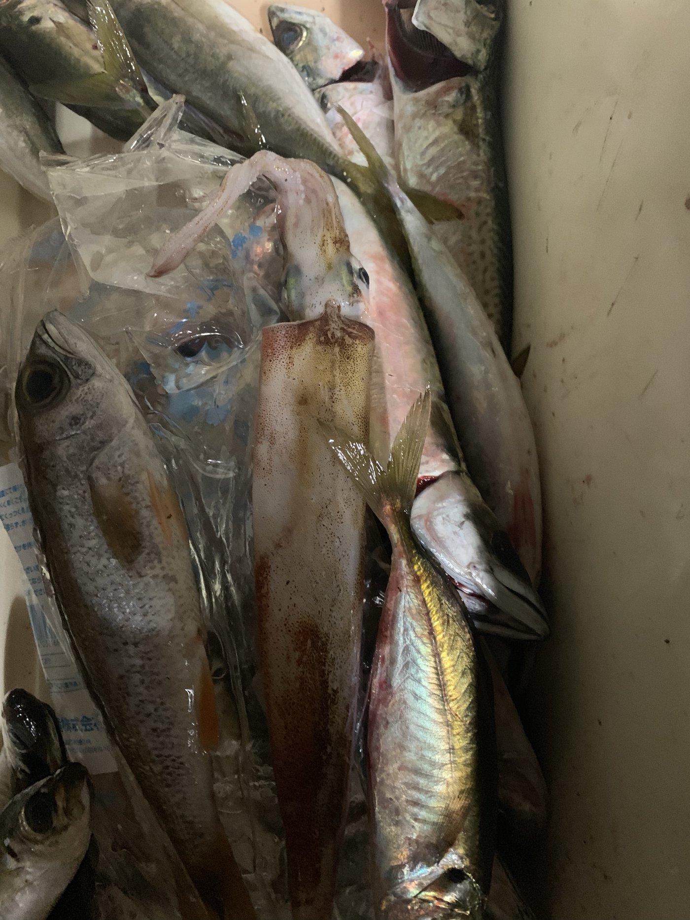 Fishingclubさんの投稿画像,写っている魚は