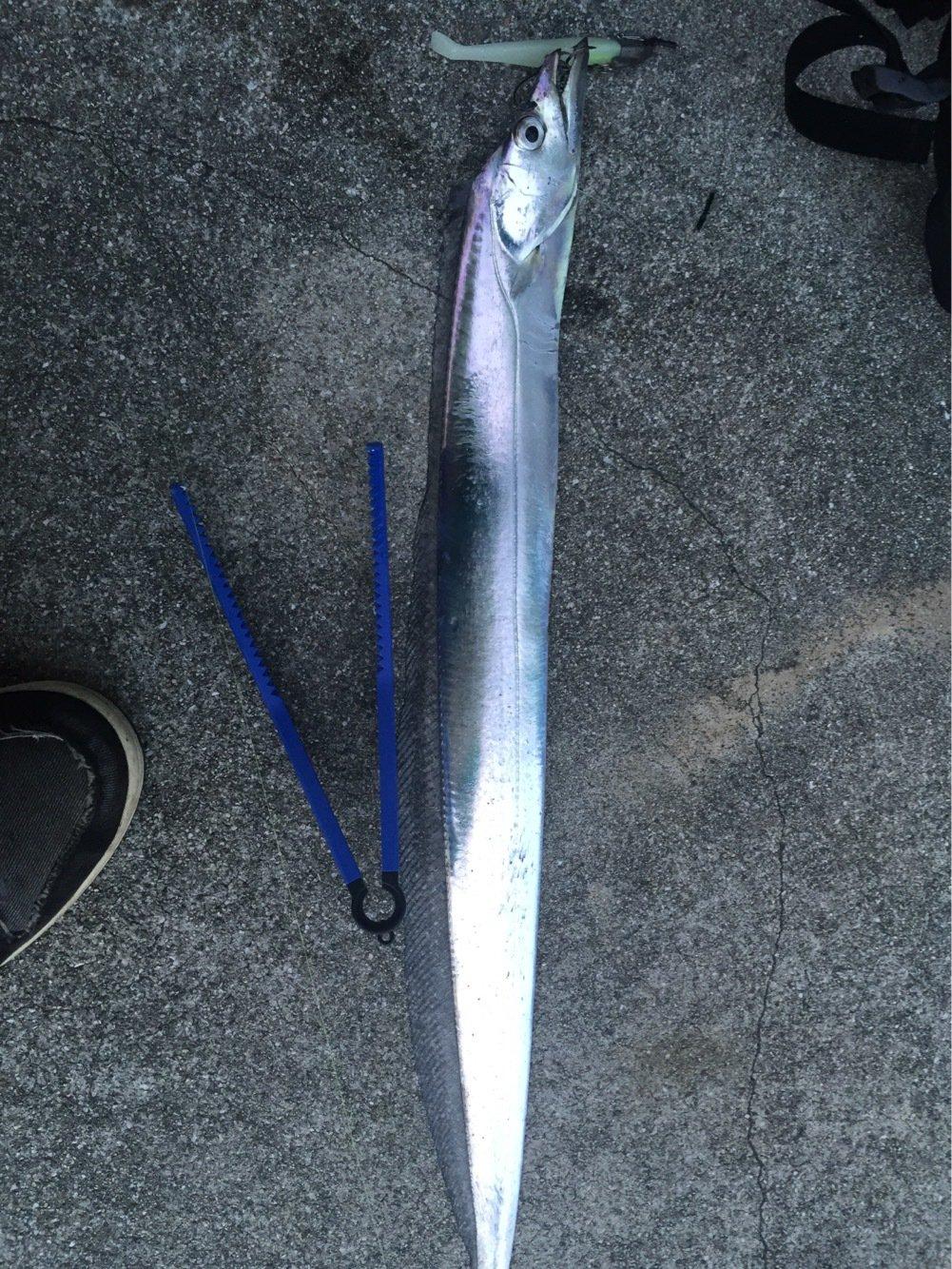 きんさんの投稿画像,写っている魚は