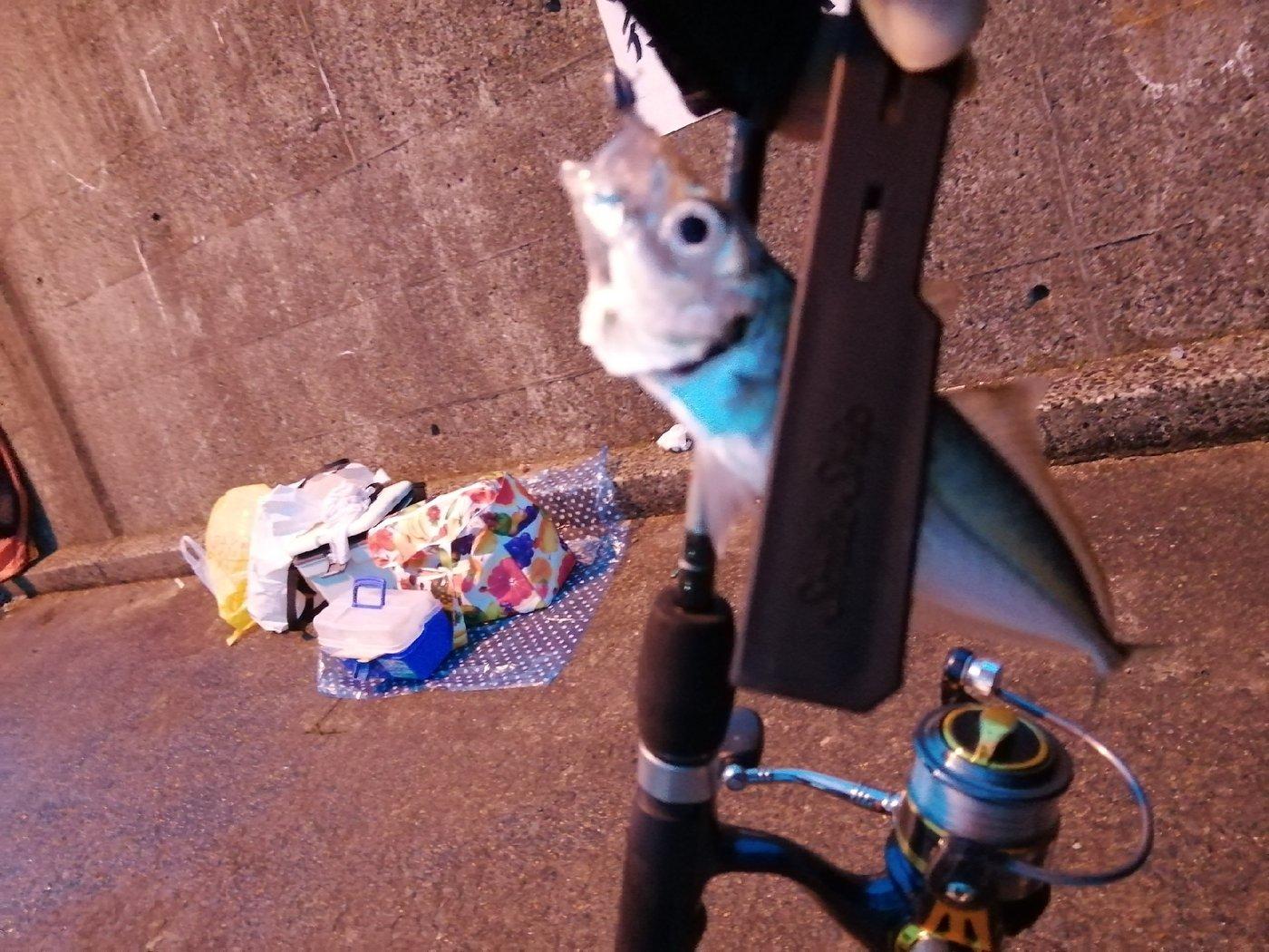 Hawabriさんの投稿画像,写っている魚はアジ