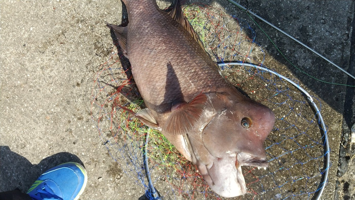 ガシさんの投稿画像,写っている魚は