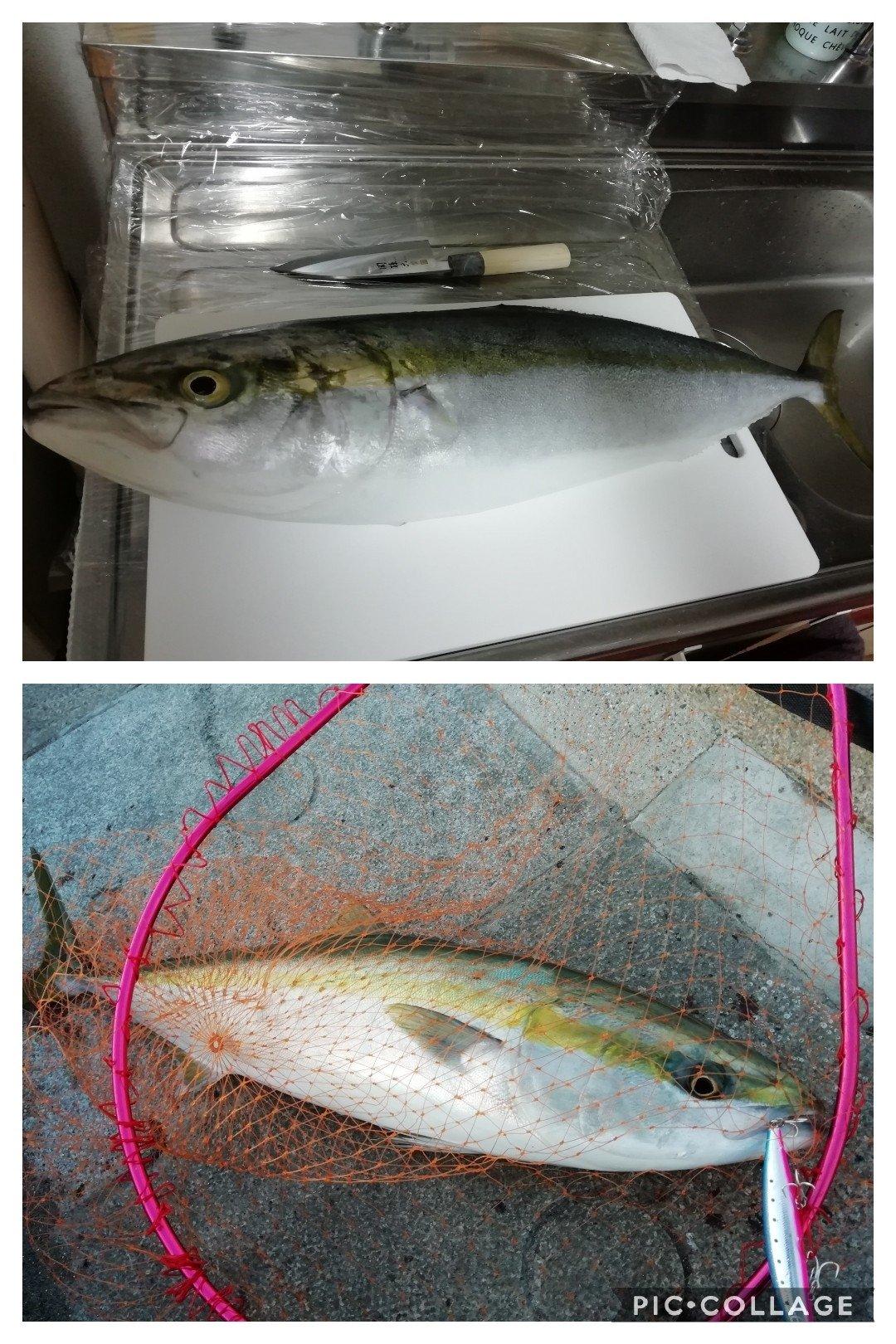 スパイシー男爵さんの投稿画像,写っている魚はブリ