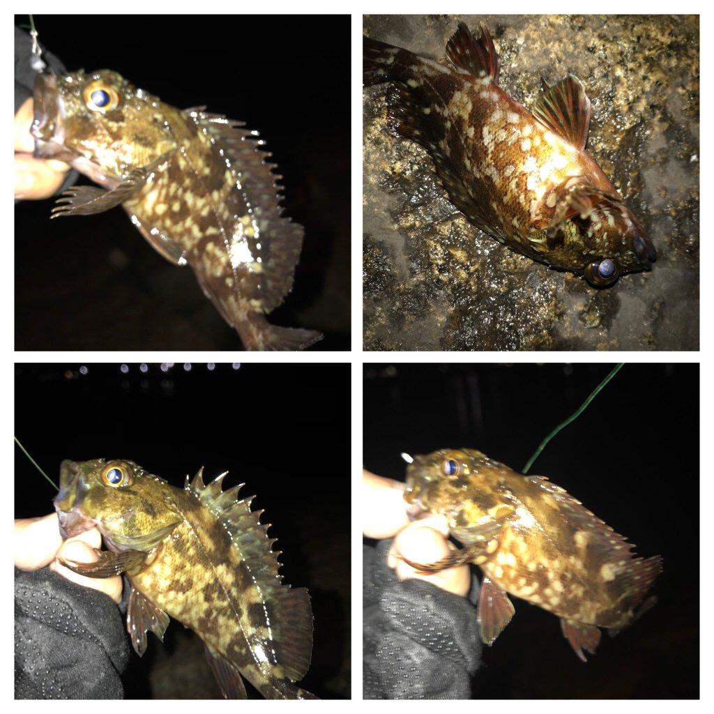 ぎーちゃんさんの投稿画像,写っている魚はカサゴ