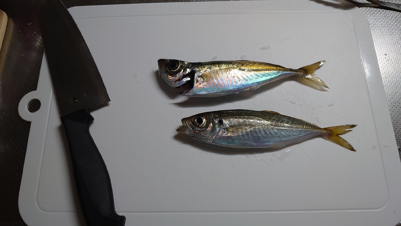 ノエポンさんの投稿画像,写っている魚はアジ