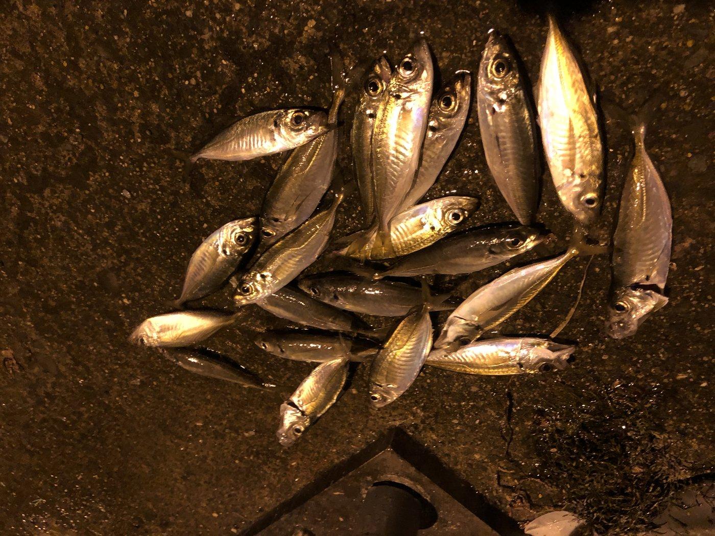 野口滉生さんの投稿画像,写っている魚は