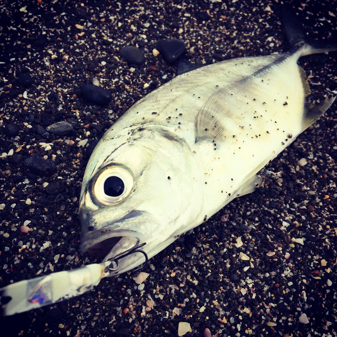 tkyさんの投稿画像,写っている魚はギンガメアジ