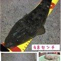 Angler🇯🇵TAKASHIさんの愛知県常滑市でのコチの釣果写真