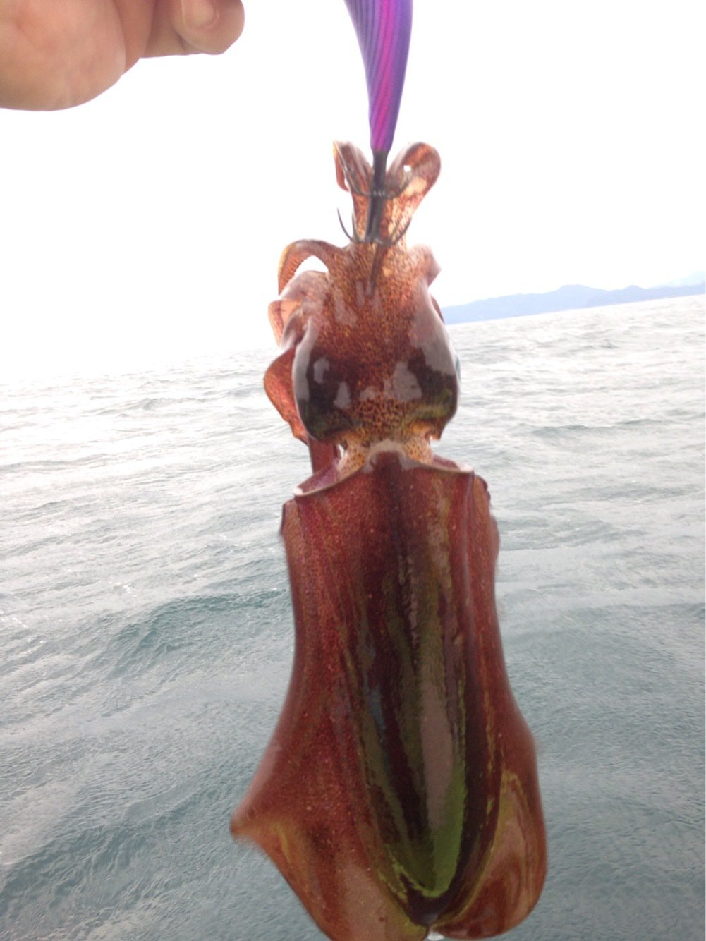 マッチさんの投稿画像,写っている魚はアオリイカ
