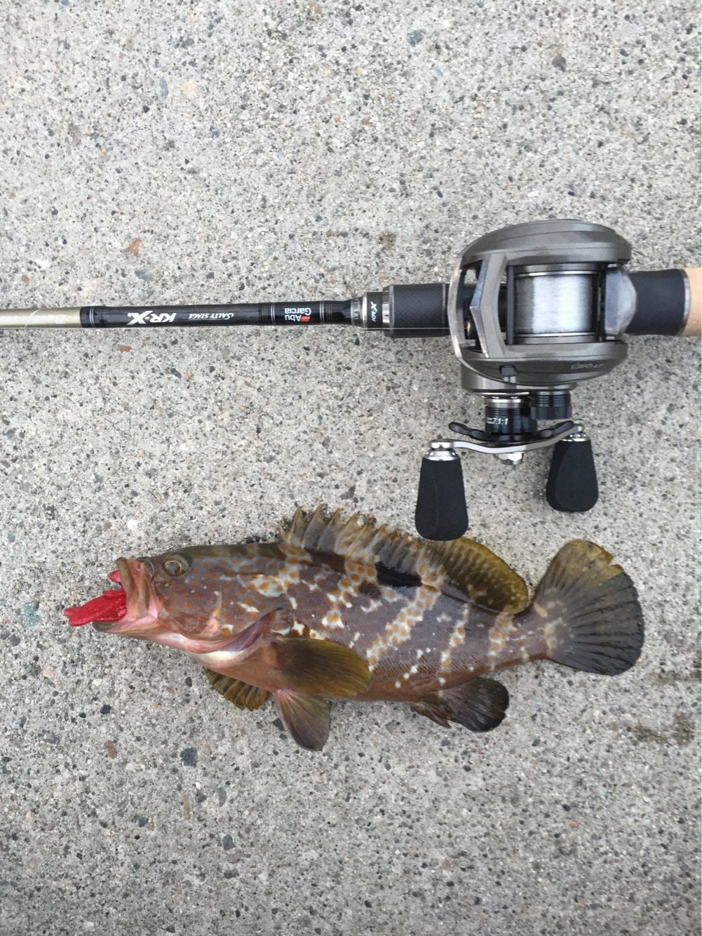 アラキさんの投稿画像,写っている魚はキジハタ