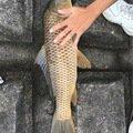 Yoshiさんの奈良県桜井市での釣果写真