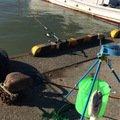 爆釣問題さんの北海道勇払郡での釣果写真