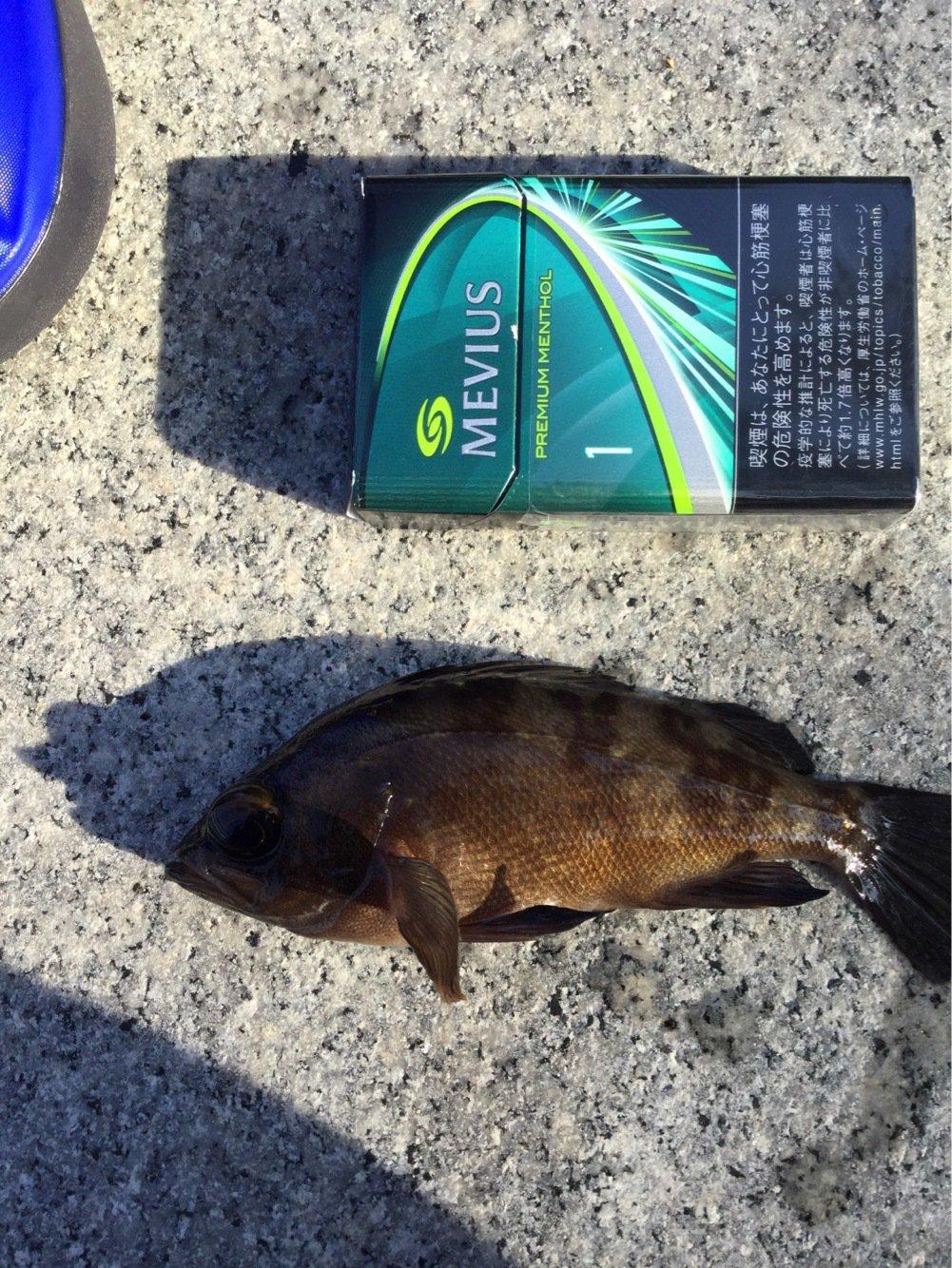 無道さんの投稿画像,写っている魚はメバル