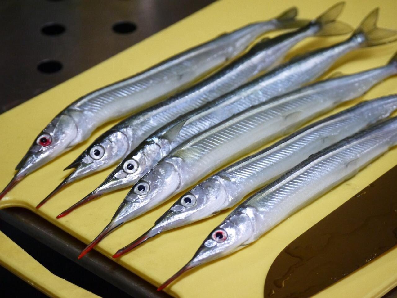 Takaさんの投稿画像,写っている魚はサヨリ
