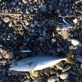 ゆーやさんの三重県南牟婁郡での釣果写真