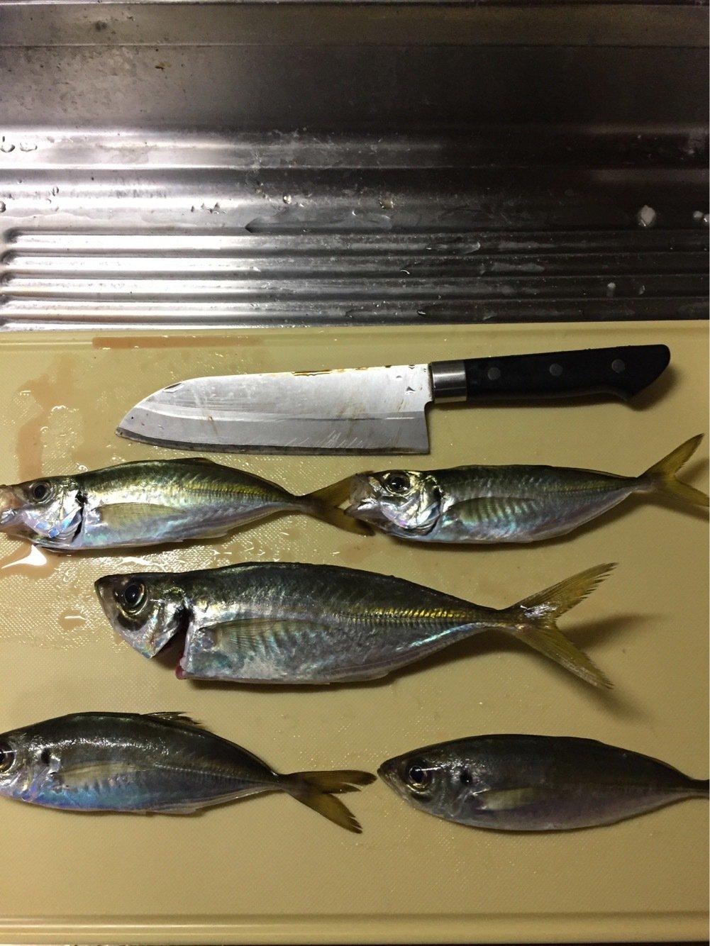 タナッチさんの投稿画像,写っている魚はアジ