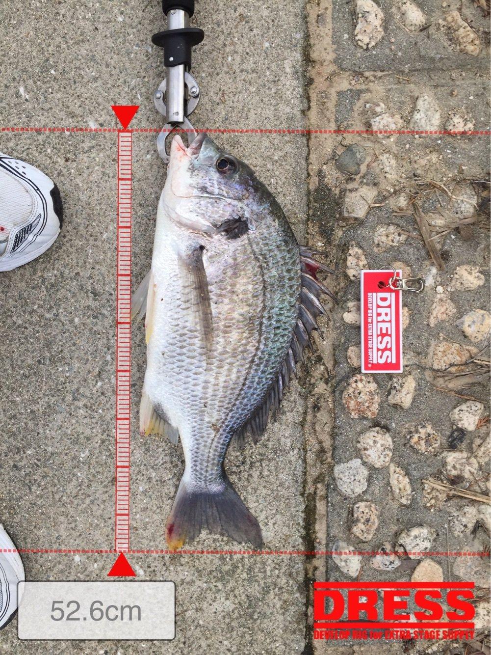 健治さんの投稿画像,写っている魚はキチヌ