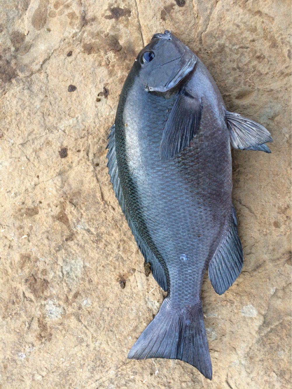 モリ男さんの投稿画像,写っている魚は