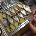 のんたんさんの神奈川県横須賀市でのウミタナゴの釣果写真