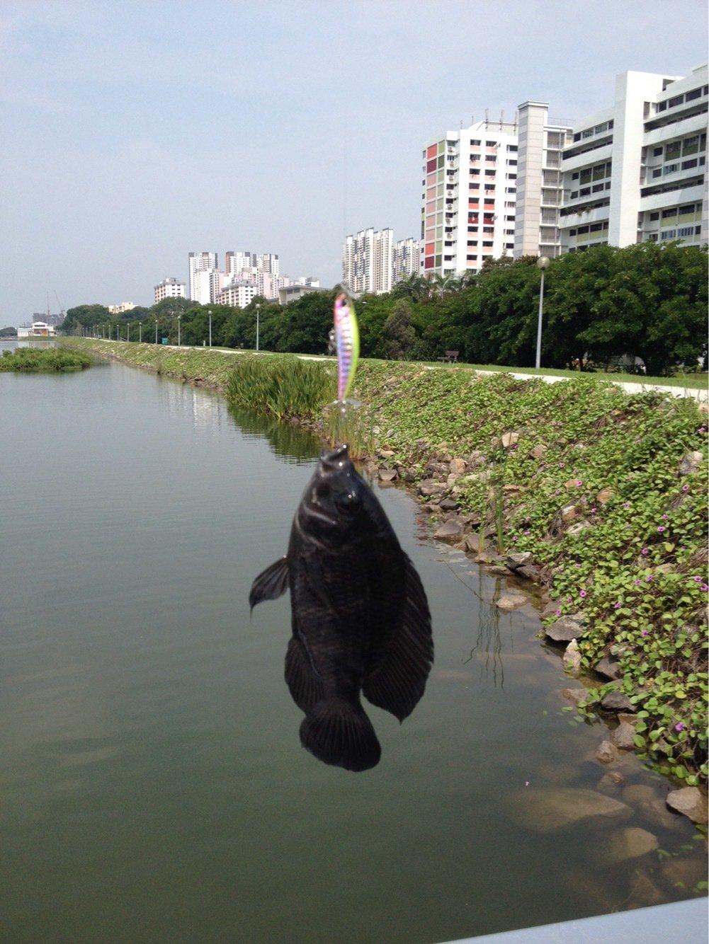 HJMMさんの投稿画像,写っている魚は