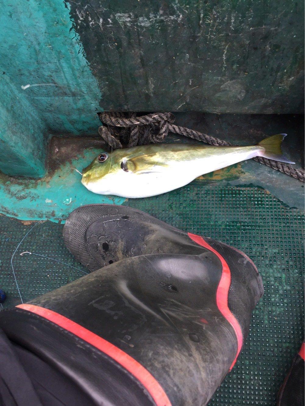 CJman125さんの投稿画像,写っている魚はフグ