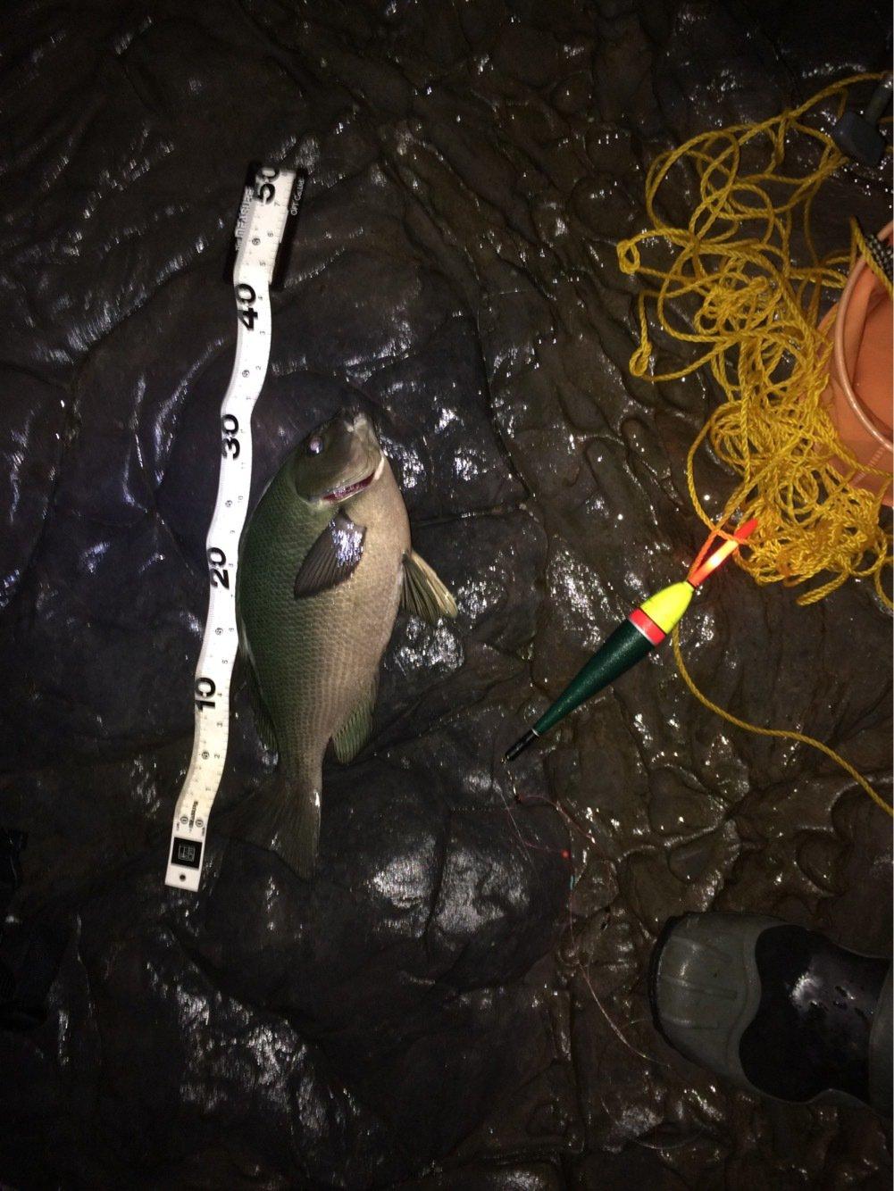 ぐっchanさんの投稿画像,写っている魚はメジナ
