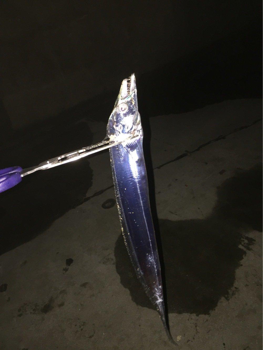 trumpeterhiro さんの投稿画像,写っている魚はタチウオ