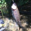 Mtsinさんの北海道恵庭市での釣果写真