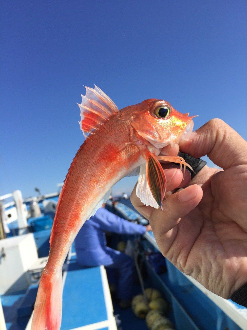 まるたさんの投稿画像,写っている魚はカナガシラ