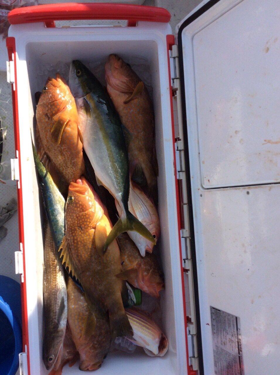 sJimさんの投稿画像,写っている魚はキジハタ