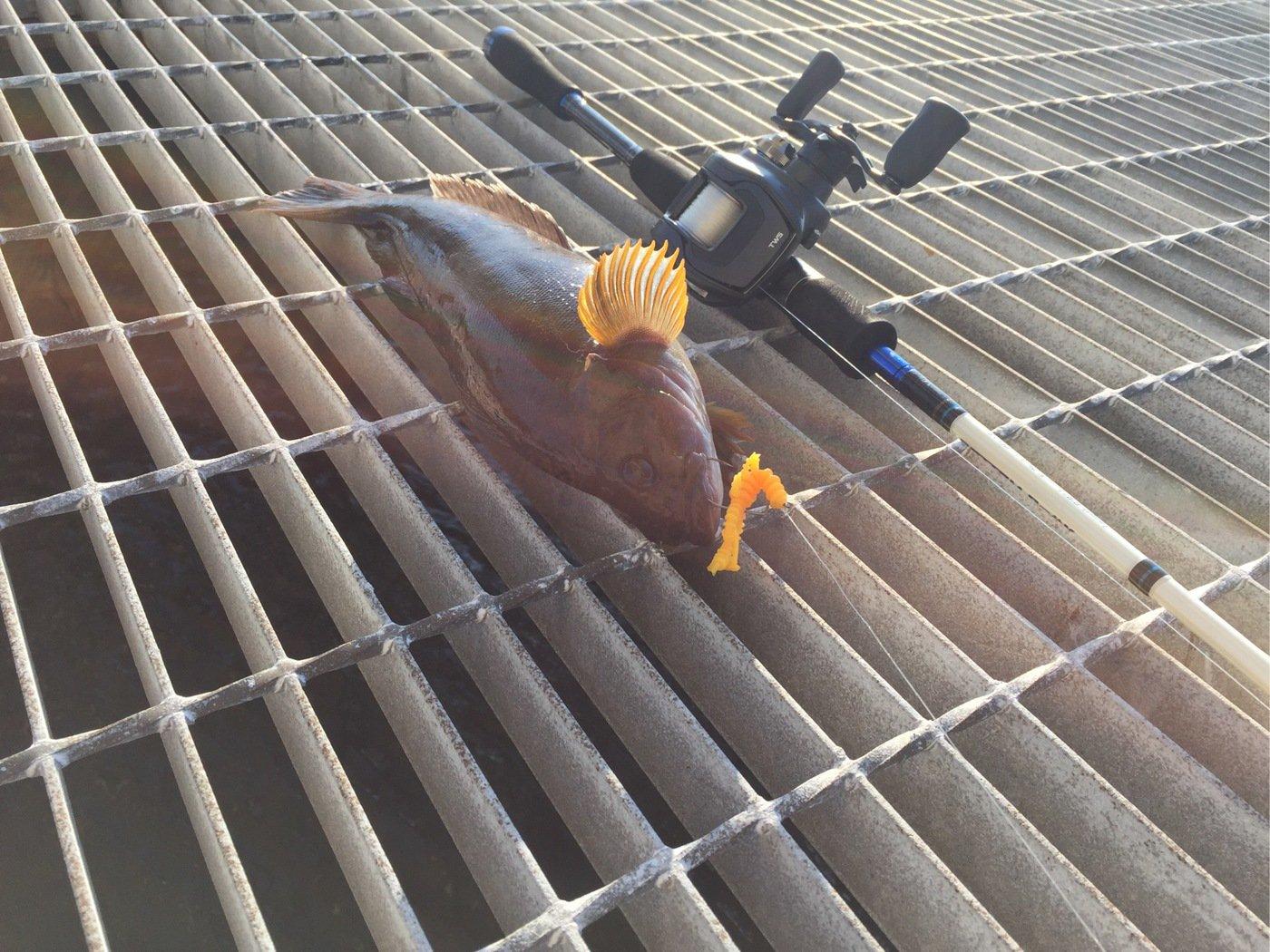 アングラー儀洋さんの投稿画像,写っている魚はアイナメ