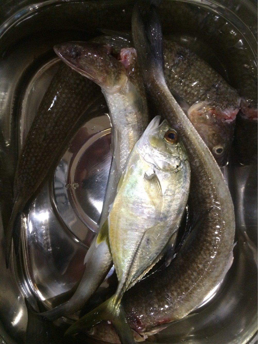 Masato Miyoshi さんの投稿画像,写っている魚は