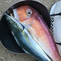 nomanslandさんの静岡県熱海市でのアマダイの釣果写真