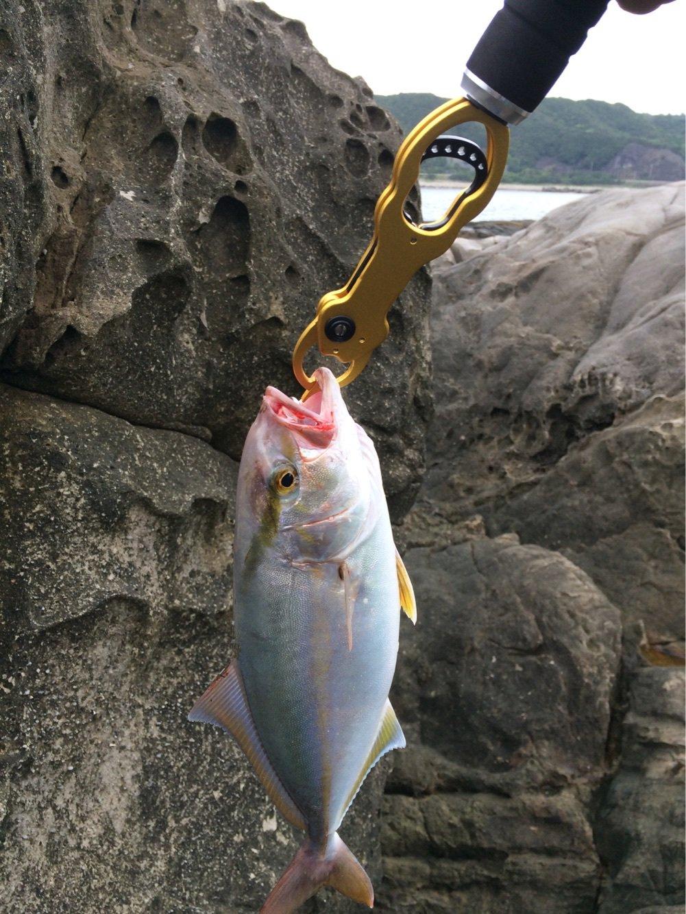 ぺろさんさんの投稿画像,写っている魚はカンパチ