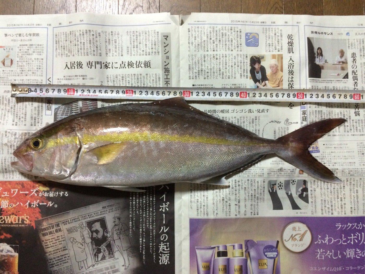 どーちんさんの投稿画像,写っている魚はカンパチ