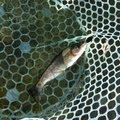 MGNMさんの栃木県那須烏山市での釣果写真