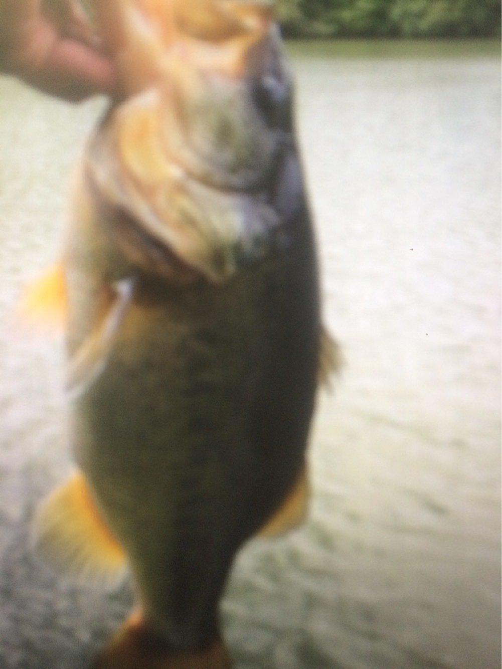すなさんの投稿画像,写っている魚は
