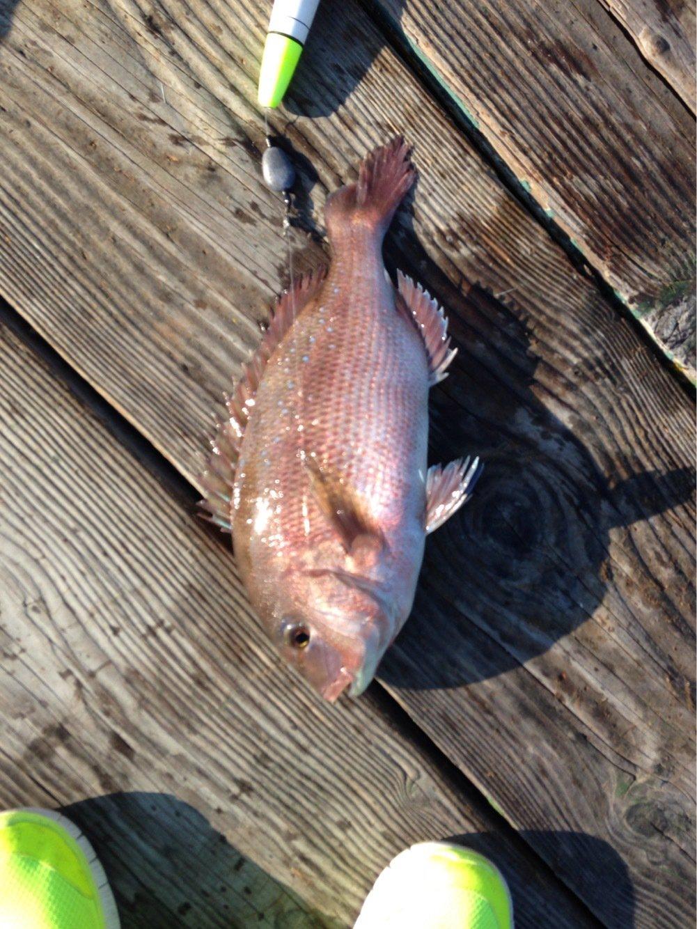 283さんの投稿画像,写っている魚は