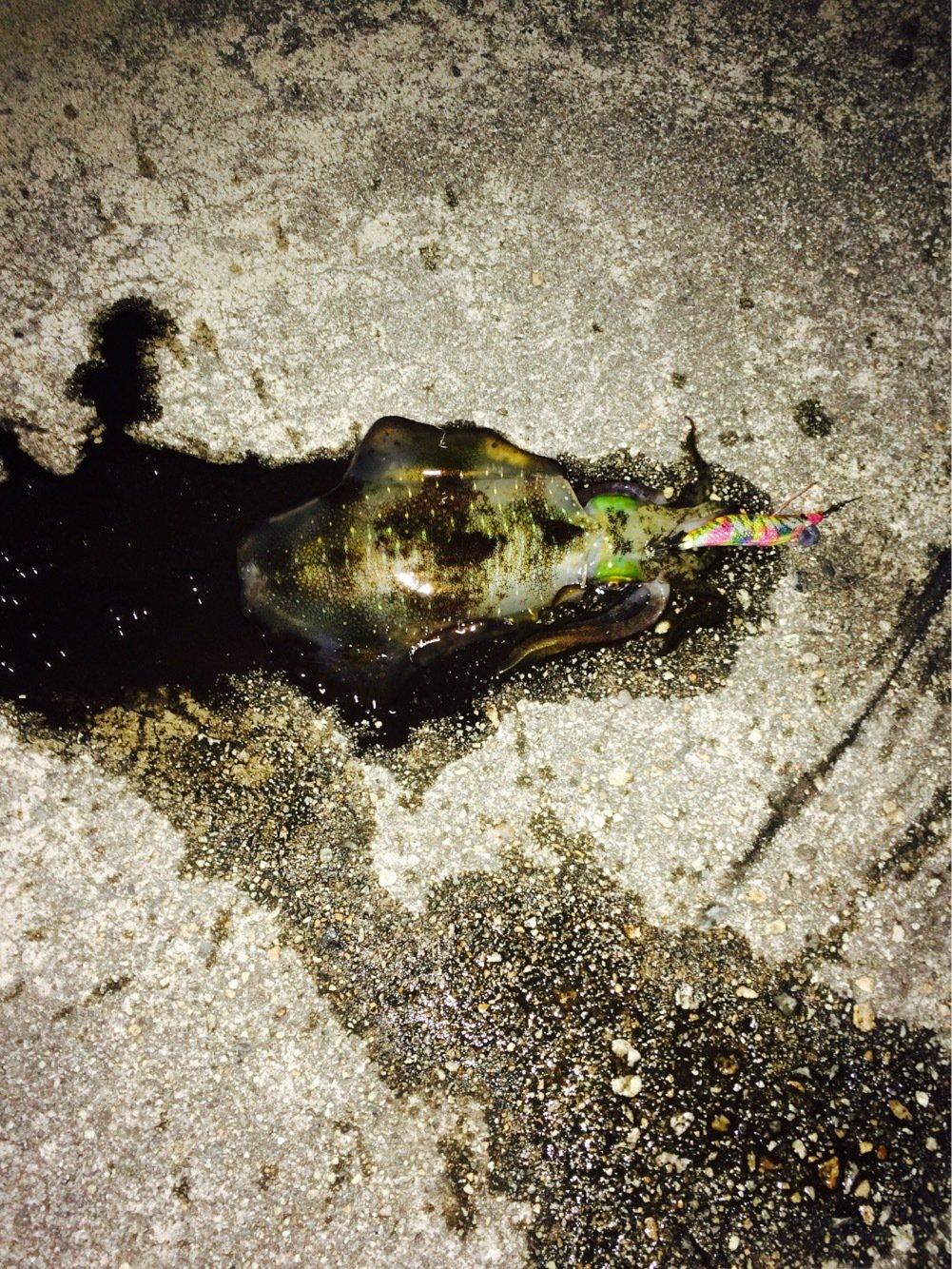 リョウガップルさんの投稿画像,写っている魚は
