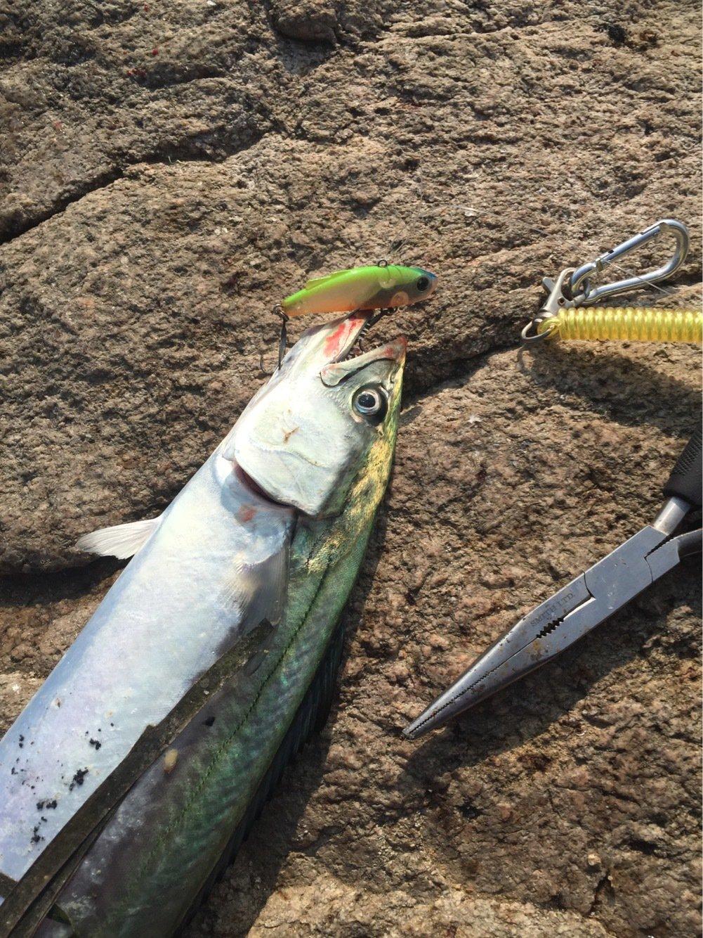 豚骨あんどうさんの投稿画像,写っている魚はサワラ
