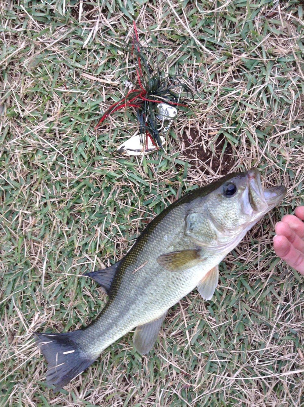 チョベリグ最高!!さんの投稿画像,写っている魚はブラックバス