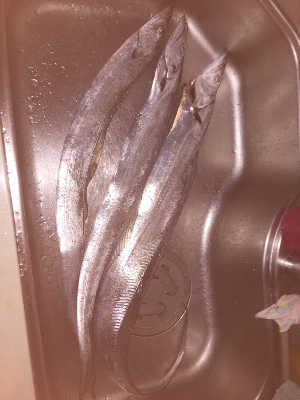 カレー好きチヌ師さんの投稿画像,写っている魚は