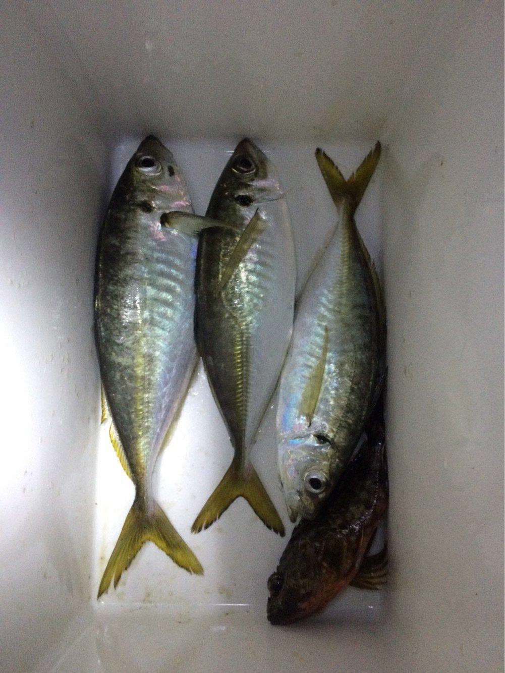 まさしさんの投稿画像,写っている魚はアジ
