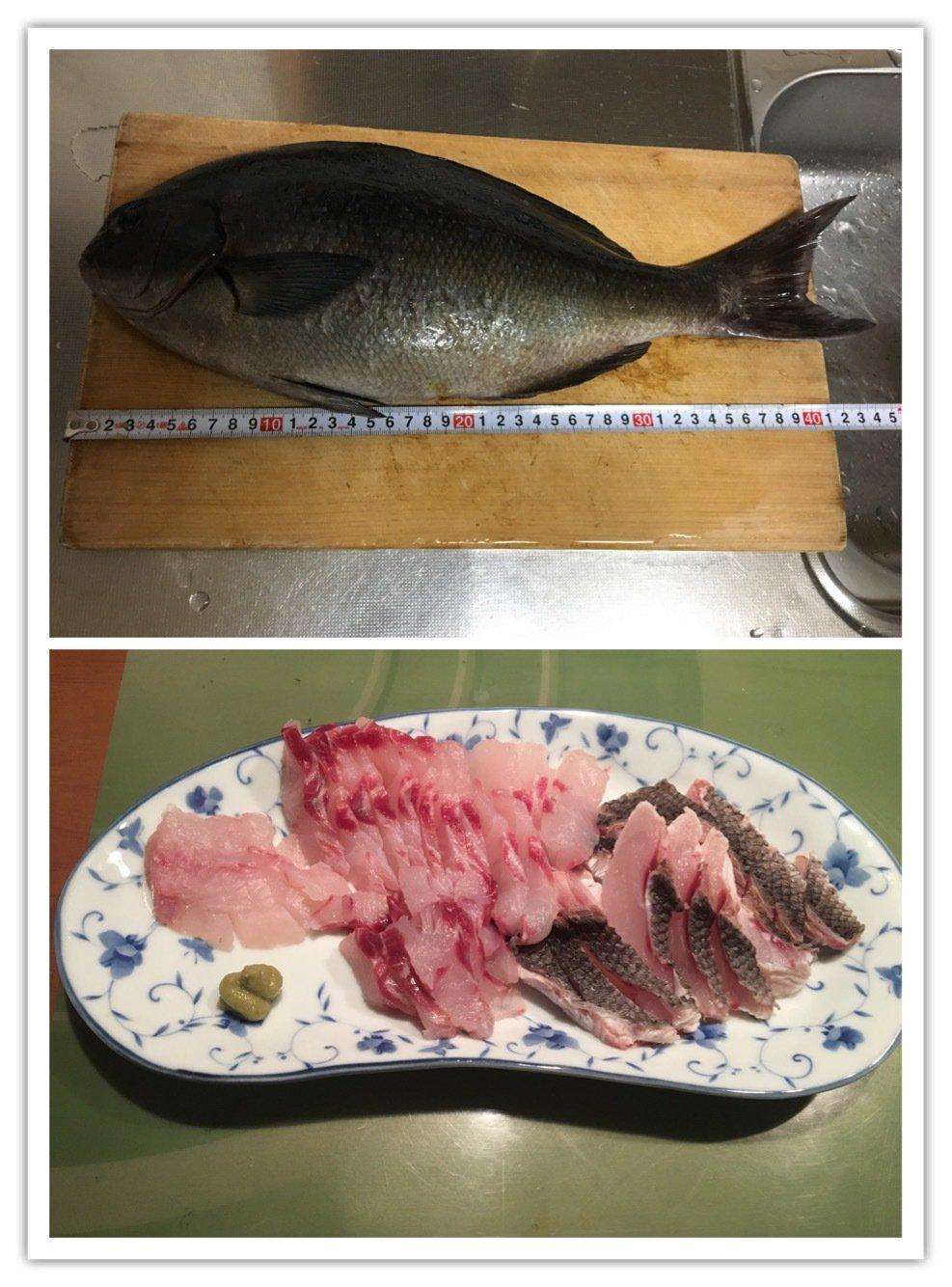 Yuuuuuuukiさんの投稿画像,写っている魚はクロメジナ