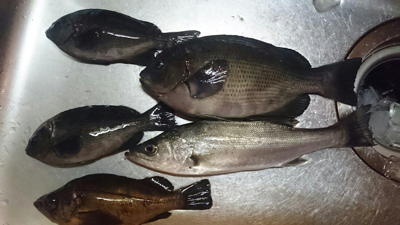 つーさんさんの投稿画像,写っている魚はメジナ