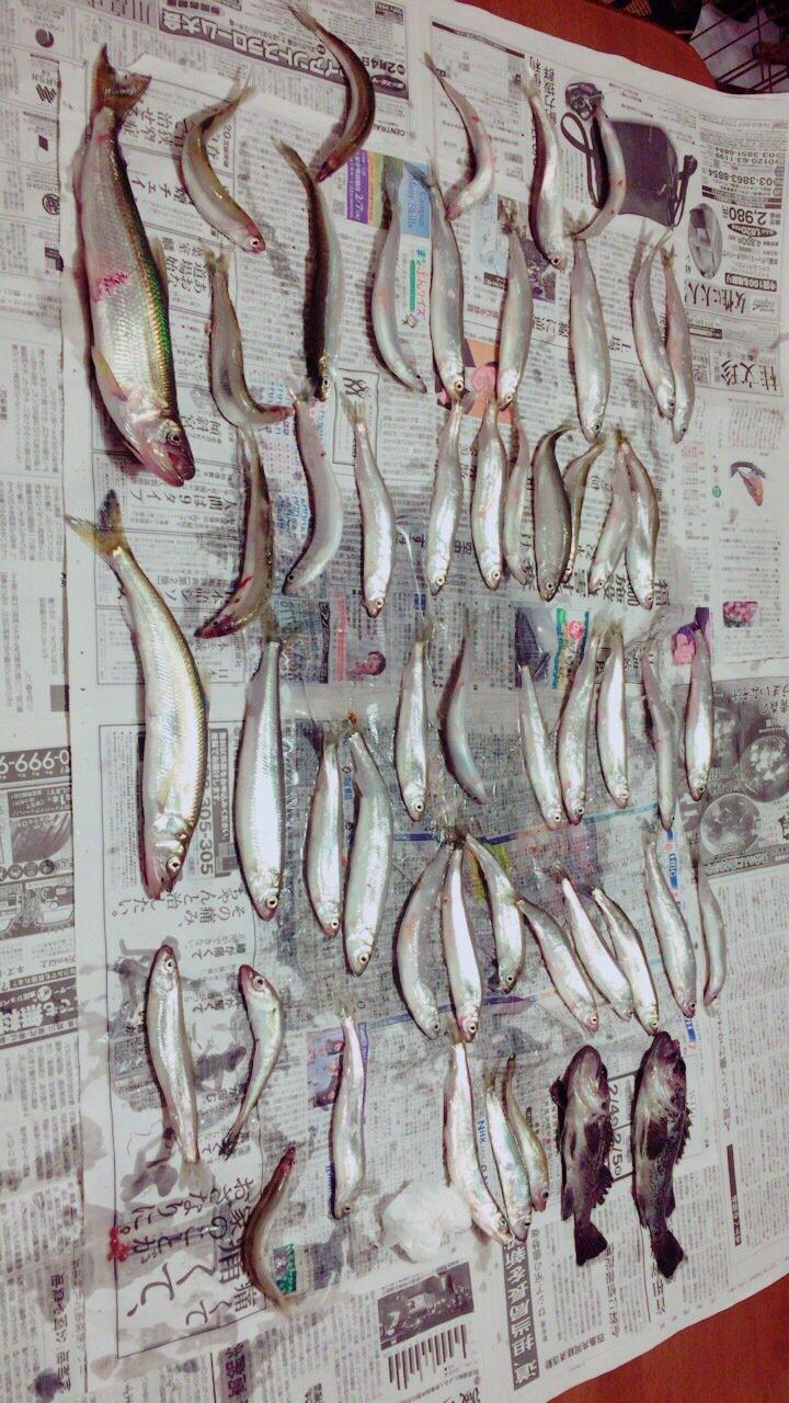 ドラえもんさんの投稿画像,写っている魚は