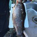渉さんの長野県伊那市での釣果写真